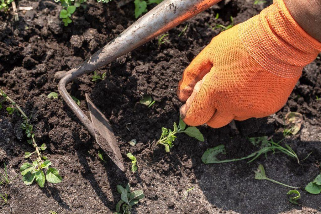desherbage pour planter du gazon